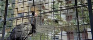 rueducine.com-l-oiseau-au-plumage-de-cristal-grue